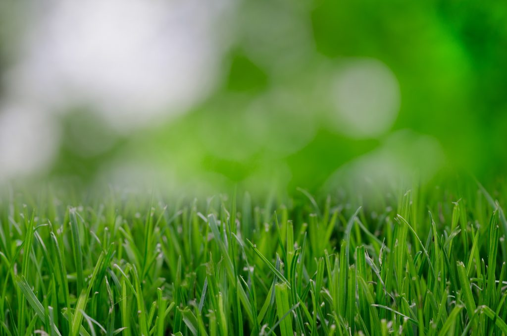 A Helpful Garden Maintenance Plan For Busy Homeowners Mojitos And