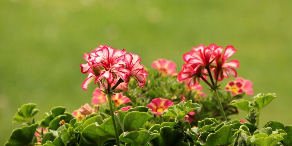 Use Your Garden As A Natural De-Stressing Tool!