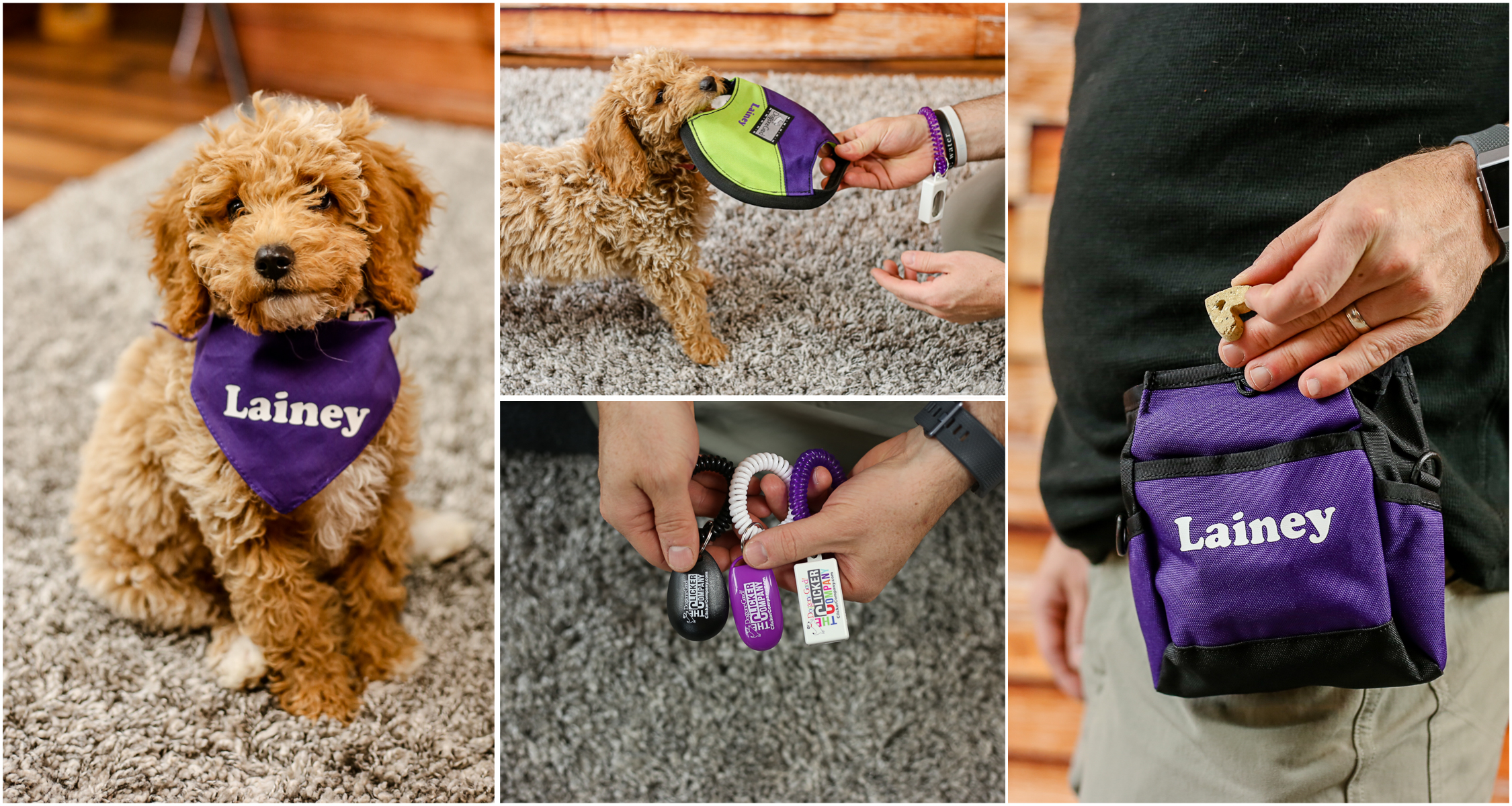 new-dog-dog-gone-dog-products