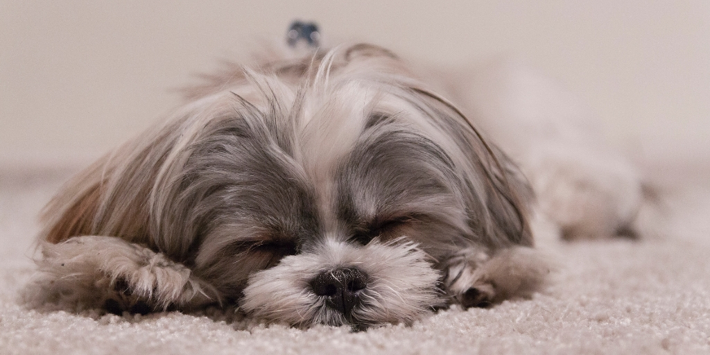 6 Things You Should Know About Sleeping with Your Dog